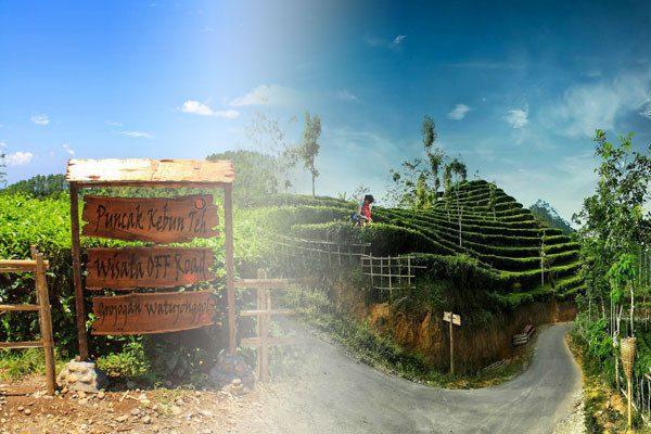 Kebun Teh Nglinggo Samigaluh Kulon Progo