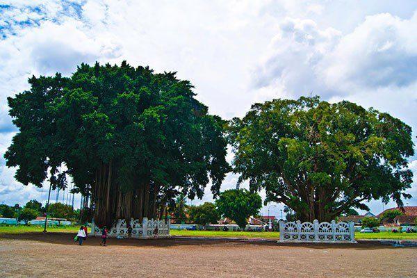 alun-alun-kidul Pesona Malam di Alun-alun Kidul Jogja yang Tak Terlupakan